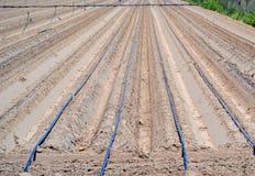 Трубки полива в поле Стоковые Фото