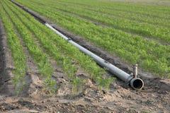 Трубопровод в поле ` s моркови стоковая фотография