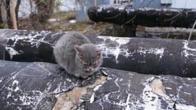 Трубопровод магистрали парового отопления на улице Серый кот греясь в теплой трубе акции видеоматериалы