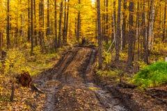Трубопровод с лужицами, Milkovsky Districkt леса, Камчатка, Россия стоковое фото rf