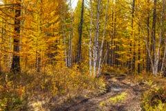 Трубопровод с лужицами, Milkovsky Districkt леса, Камчатка, Россия стоковое изображение rf
