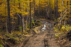 Трубопровод с лужицами, Milkovsky Districkt леса, Камчатка, Россия стоковая фотография