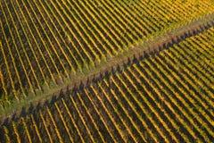 Трутень виноградника снял, вид с воздуха сверху стоковые изображения