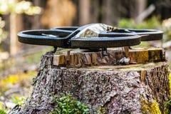 Трутень леса Стоковые Изображения RF