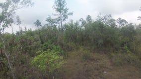 Трутень летая над саванной джунглей в Центральной Америке видеоматериал