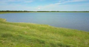 Трутень летает от озера с банком травы назад к полю гречихи видеоматериал