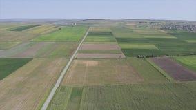 Трутень летая над зеленым пшеничным полем весной акции видеоматериалы