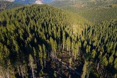 Трутень снял, вид с воздуха зеленого леса стоковые фото