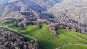 Трутень снятый взгляда сверху на плантации зеленого чая в осени сток-видео