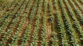 Трутень снятый полей и зеленых домов, страны фермы видеоматериал