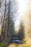 Трудная дорога в древесинах Стоковое Изображение RF