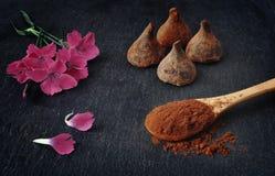 трюфеля изолированные шоколадом белые Порошок какао чисто Стоковое Фото