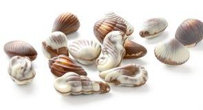 Трюфеля Seashell шоколада Стоковая Фотография