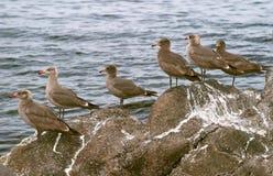 трясет seabirds стоковое изображение rf