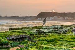 трясет seaweed Стоковая Фотография RF