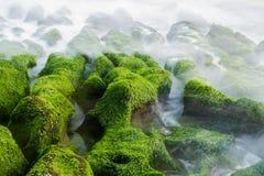 трясет seaweed Стоковая Фотография