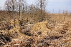 Трясина в предыдущей весне Стоковая Фотография