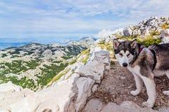 Трясина на верхней части горы Стоковая Фотография RF