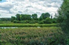 Трясина полесья Рассказ леса зеленый ландшафт цветастые валы Стоковые Фотографии RF