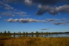 Трясина Koigi в Saaremaa, Эстонии Стоковая Фотография