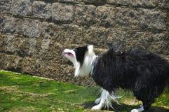Трясти собаки стоковое изображение