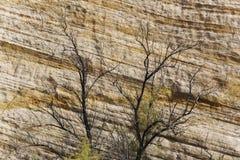 Тряхните слои и деревья на прописном национальном парке рифа, Юте Стоковые Изображения RF