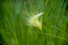 Тряхните форму сердца на поле зеленых трав Стоковые Изображения