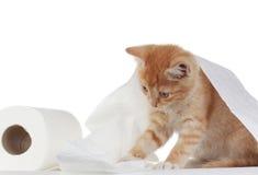 туалет котенка бумажный Стоковое Изображение RF