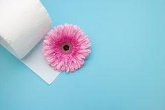 Туалетная бумага и розовый цветок маргаритки gerbera Фото зачатия гигиены, селективный мягкий фокус Место для космоса, copyspace стоковые изображения