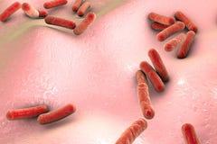 Туберкулез микобактерии бактерий иллюстрация вектора