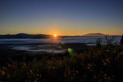 Туманная гора и поле желтых цветков Стоковое Фото