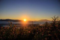 Туманная гора и поле желтых цветков Стоковое Изображение