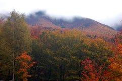 Туманная гора с цветами падения стоковое фото