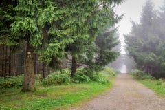 Туманная горная тропа в лесе Стоковая Фотография