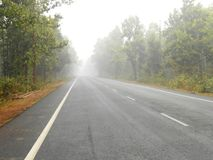 Туманная дорога через лес соли стоковое фото rf