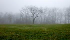 Туманная линия деревьев Стоковые Фото