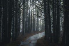 Туманная дорога леса Стоковое Изображение RF