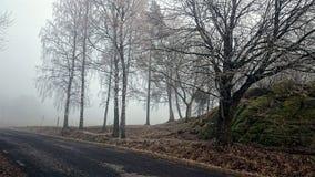Туманная поездка стоковое фото