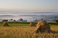 туманная пшеница утра Стоковая Фотография
