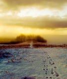 туманная древесина стоковая фотография