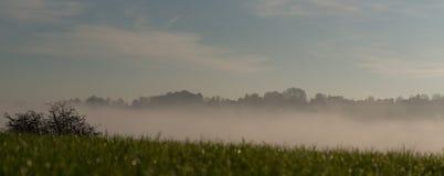 Туманная роса стоковое изображение rf