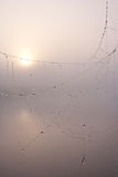 туманная сеть паука утра Стоковое Фото