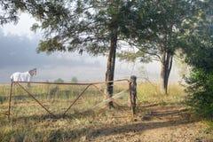 Туманная сельская местность утра Стоковая Фотография RF