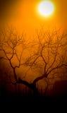 Туманная сельская местность утр Стоковое фото RF