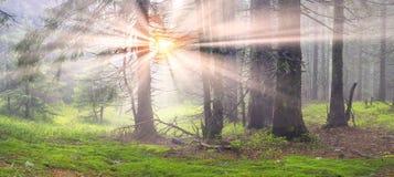 Туманная чаща Стоковые Фото