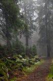 туманнейшая древесина footpath Стоковое Фото