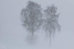 туманнейшая зима пейзажа Стоковое Изображение RF