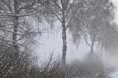 туманнейшая зима пейзажа Стоковое фото RF