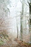 туманнейшая зима утра Стоковое Изображение