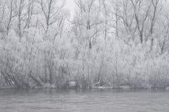 туманнейшая зима утра Стоковая Фотография